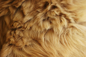 Fur 13 Texture