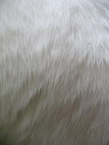 Fur 2 Texture