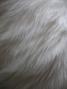 Fur 3 Texture