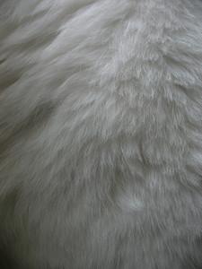 Fur 4 Texture
