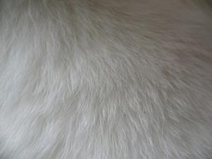 Fur 5 Texture