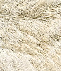 Fur 6 Texture