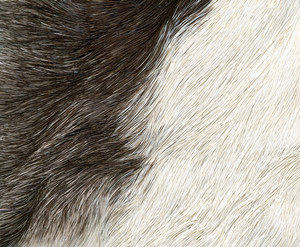 Fur 7 Texture