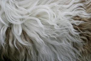 Fur 8 Texture