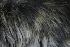 Fur 9 Texture