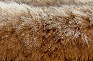 Fur Bobcat