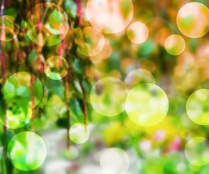 Garden Bokeh Texture