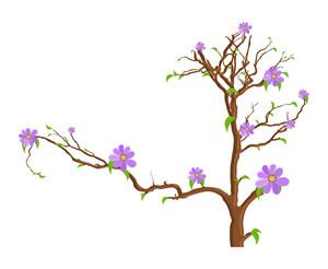 Garden Flowers Plant