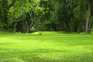 Garden green grass