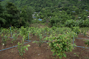 Garden on mountain