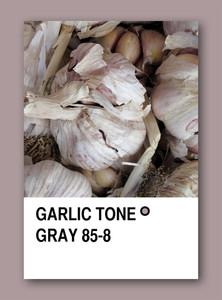 Garlic Tone Gray. Color Sample Design