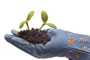 Gloved Hand With Baby Plants