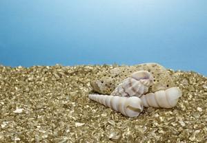 Golden Pebbles Sea Shells Background