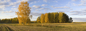Golden trees and a harvested field in autumn