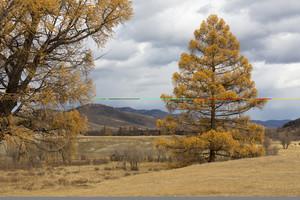 Golden trees under a cloudy autumn sky