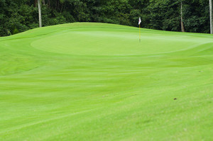 golf green grass on country club