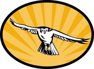 Goshawk Bird Swooping Down