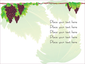 G rapeseed Cluster Vector With Sample Text