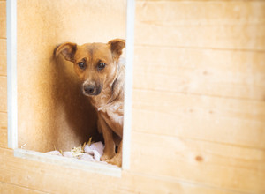 A dog in an animal shelter, waiting for a home
