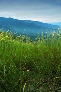 A rugged trail through a highland grassland.