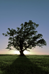 A silhouette of tree in the sunset. Add shadows at the ground.