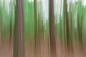 Abstract blurred spring forest background image created in camera