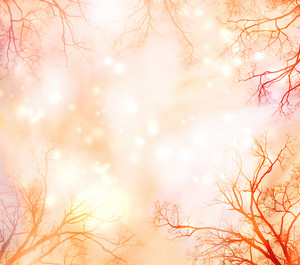 Abstract lights background with tree border  (glowing pale orange, red and yellow)