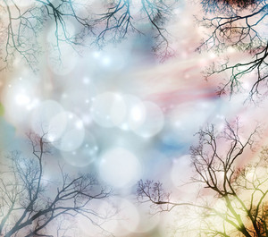 Abstract lights background with tree border
