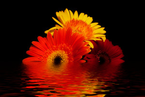 Amazing Flower Bouquet reflected in Water