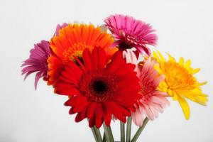 Amazing Flower Bouquet