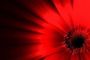 Amazing Red Flower