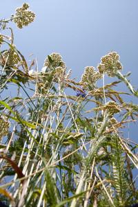 Amazing wild plants