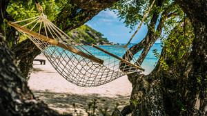 Appealing Hammock between bizarre Trees , Haad Rin , Koh Pangang