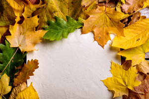 Autumn composition, empty paper sheets and colorful leaves. Studio shot. Copy space.