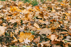 Autumn dry leaves on the grass, close-up