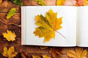 Autumn leaf composition with photo album. Studio shot on wooden background.