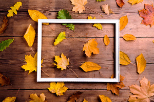 Autumn leaf composition with picture frame. Studio shot on wooden background.