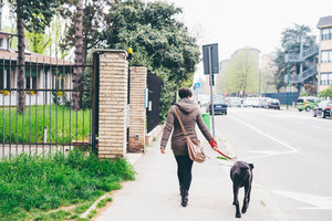 Back view of young caucasian short hair woman walking in the city with her dog - friendship, companion, strolling concept