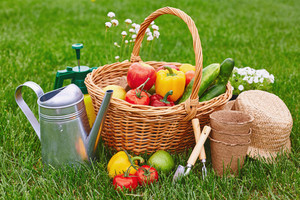 Basket with fresh harvest and gardening tools on green grass