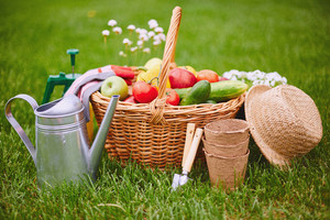 Basket with fresh vegs and gardening equipment on green grass