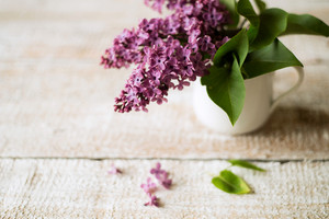 Beautiful lilac bouquet in vase laid on table. Studio shot on white wooden background.