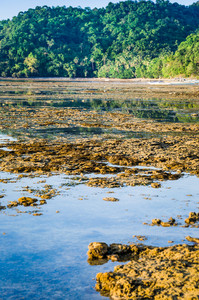 Beautiful Reflection of Jungle in Water on Low Tide, El Nido, Palawan, Philippines