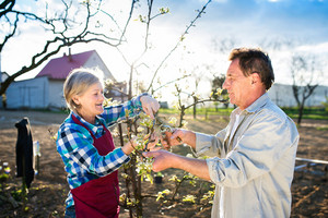 Beautiful senior couple pruning apple tree in his garden