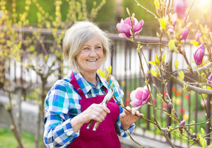 Beautiful senior woman pruning magnolia tree in her garden
