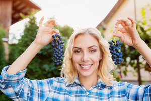 Beautiful young blond woman in checked shirt harvesting blue grapes, holding two bunches of grapes in her hands
