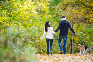 Beautiful young couple with dog on a walk in colorful sunny autumn forest, rear view