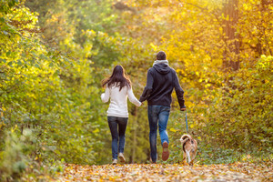 Beautiful young couple with dog running in colorful sunny autumn forest, rear view