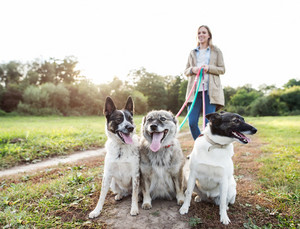 Beautiful young pregnant woman on a walk with three dogs in green sunny nature