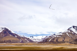 Birds flying between mountains in arctic summer landscape