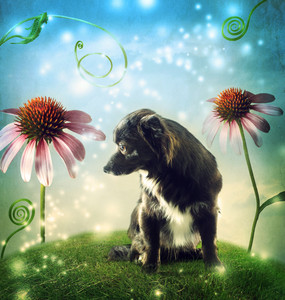 Black dog in a fantasy hilltop landscape with echinacea flowers